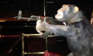 En chimpas med k-pist.