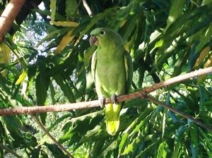 Papegojan som alltid satt vid vår balkong! Vi döpte honom till Glenn, men det visade sig att han hette Silvia Berlusconi.